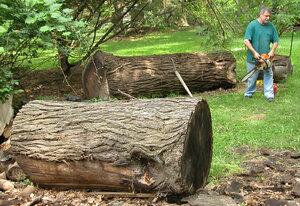walnut log.jpg