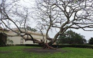 live oak1.jpg