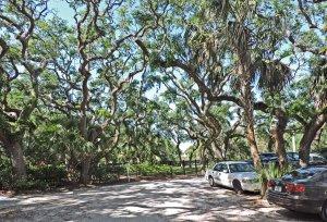 live oak2.jpg