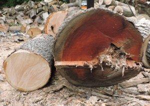 cherry logs.jpg