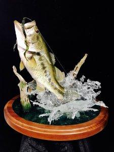 Bass with Splash.jpg