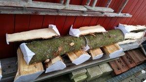 wooddrying (6).jpg